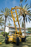 Israel, Jordan Valley, Kibbutz Ashdot Yaacov, Hydraulic platform for picking dates