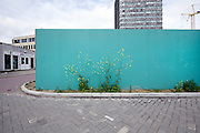 wild greenery growing against a fenced off construction area