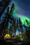 Yukon Territory, Canada, September 2014. Aurora Borealis Northern Lights shine over Little Salmon Village Campsite. During this Yukon River canoe trip we paddled part of the Klondike Gold Rush route of 1898. We camped on the banks of the Yukon River in authentic northern wilderness and explored the gold rush relics on the way. Photo by Frits Meyst / MeystPhoto.com