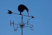 Kiwi, weather vane