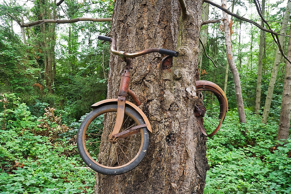 "The famed ""Bicycle Eaten by A Tree"" tucked in the woods right off the Vashon Highway on Vashon Island, Washington."