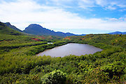 Alekoko, Menehune Fishpond, Kauai, Hawaii