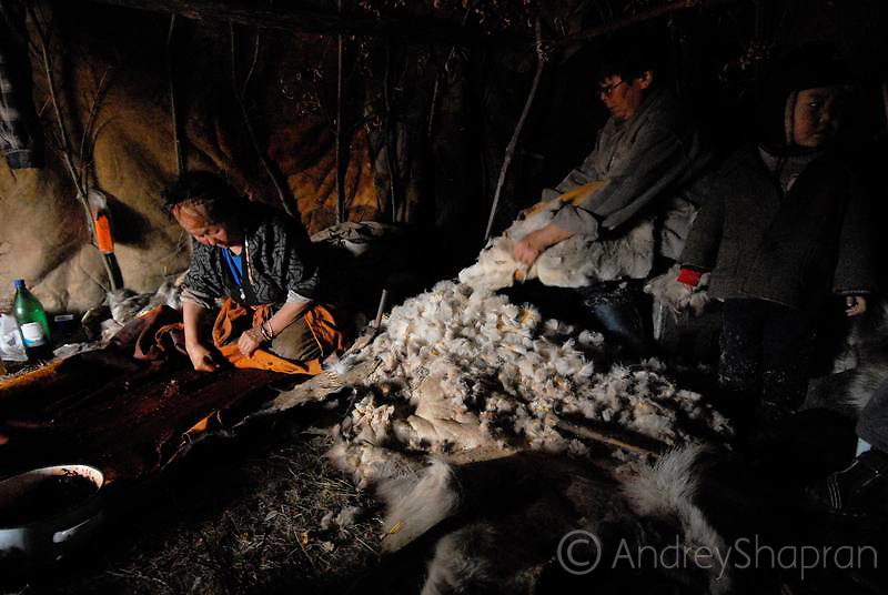 Tanning of reindeer skins in Achayvayam village.The Kamchatka peninsula, Russia
