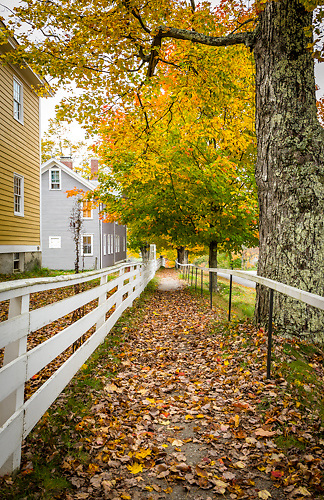 Foliage along a path at Canterbury Shaker Village, NH.<br />