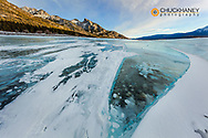 Methane ice bubbles under clear ice on Abraham Lake near Nordegg, Alberta, Canada