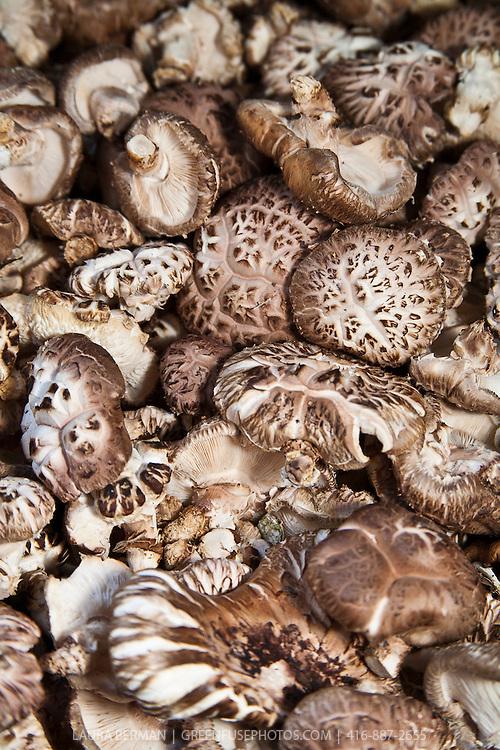 Donkos, the first flush of growth of shiitake mushrooms (Lentinula edodes).
