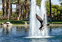 Civic Center Park, Palm Desert, California