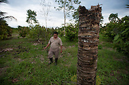 Sergio Curipoma owns a cocoa plantation in Parroquia San Carlos, Orellana. There is  oil in the ground. The company also various pipes on his land. Acquired by his father, that land produces good cocoa but if the roots touch the oil the plant die.He also lost family members due to cancer.