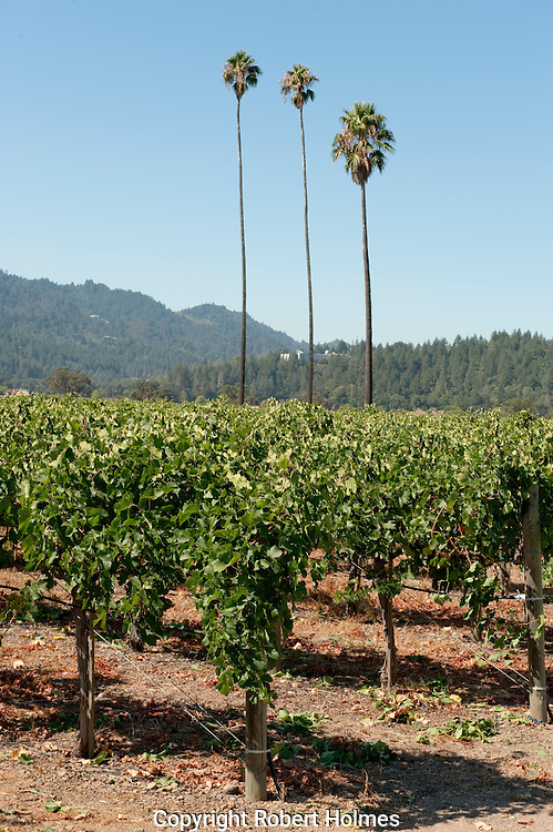 Three Palms Vineyard, Calistoga, Napa Valley