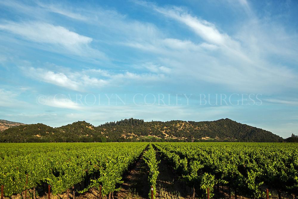 beringer vineyards yountville ranch.