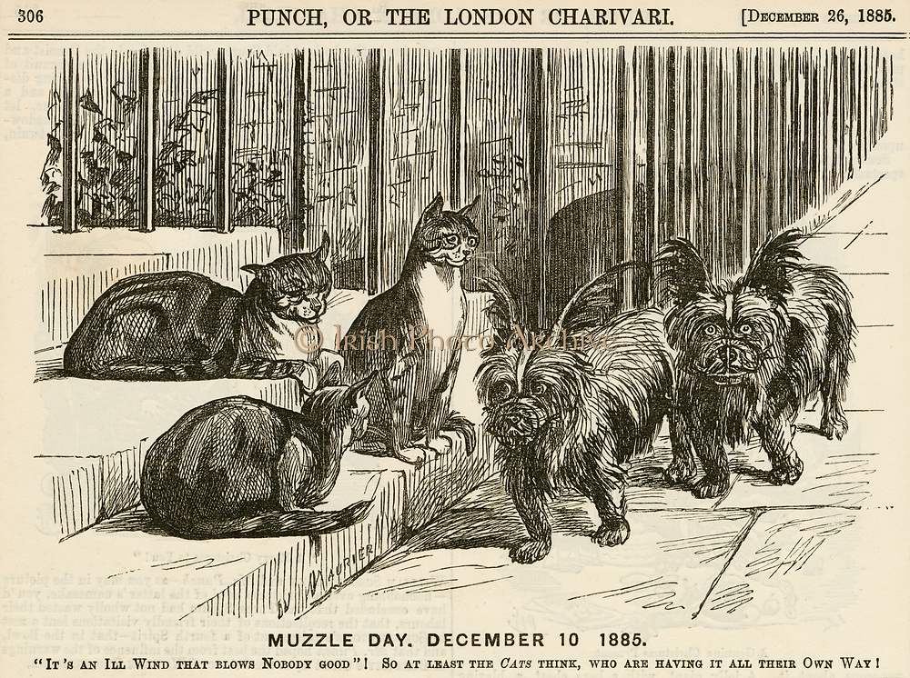 'The fear of Hydrophobia (Rabies) brought about the introduction of compulsory muzzles for dogs when on the stree, much to the delight of cats. George du Maurier cartoon from ''Punch'', London, 1886.'