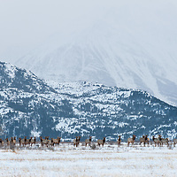 wildlife migration in the rocky mountain west