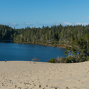 Sand dunes at Siuslaw National forest. Yachats, Oregon.