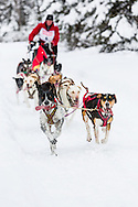Musher Ken Chezik competing in the Fur Rendezvous World Sled Dog Championships at Campbell Airstrip in Anchorage in Southcentral Alaska. Winter. Afternoon.