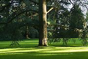 Insel Mainau, Schlosspark, Arboretum, alter Baum auf Rasen , Baden-Württemberg, Deutschland.. | ..Isle of Mainau, palace garden, old tree on lawn, Lake Constance, Germany