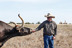 Will Cradduck, Herd Manager, with Texas longhorns from Official State of Texas Longhorn Herd, Fort Griffin State Historic Site, Albany, Texas USA.