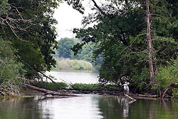 29 Jul 2011:  Great Blue Heron by Evergreen Lake in Comlara Park in McLean County Illinois (Photo by Alan Look)