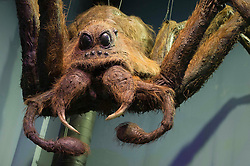 © Licensed to London News Pictures 27/02/2011 London, UK. .Aragog the spider, one of the models in The Creature Room inside The Warner Brothers Studio Tour, Leavesden, Herts where all 8 Harry Potter movies were made and opens to the public this week..Photo credit : Simon Jacobs/LNP