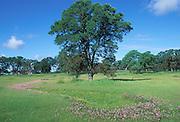 California vernal pool; checkerbloom; Sidalcea sp. ; CA, Fair Oaks, Phoenix Park