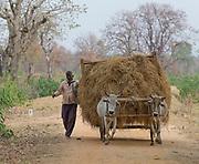 Local farmer carrying grass at Rohaniya, Bandhavgarh, India.