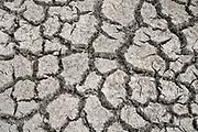 Neederland, Nijmegen, 28-7-2018Door de aanhoudende droogte hebben mens en natuur het moeilijk . Doordat regenval uitblijft worden de waterbuffers kleiner en moet het waterpeil van o.a. het IJsselmeer verhoogd worden om aan de vraag, behoefte te voldoen . Gebarsten, gescheurde, grond, bodem van een lege wateropvang, bedoeld voor opvang van hoosbuien .Foto: Flip Franssen