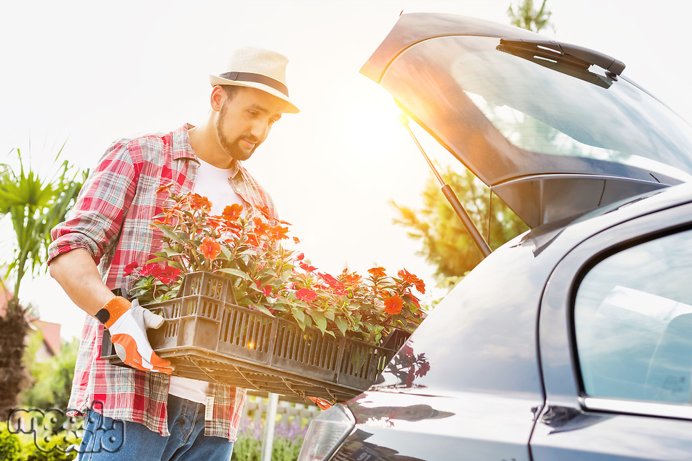 Portrait of mature gardener putting flowers on car trunk for delivery