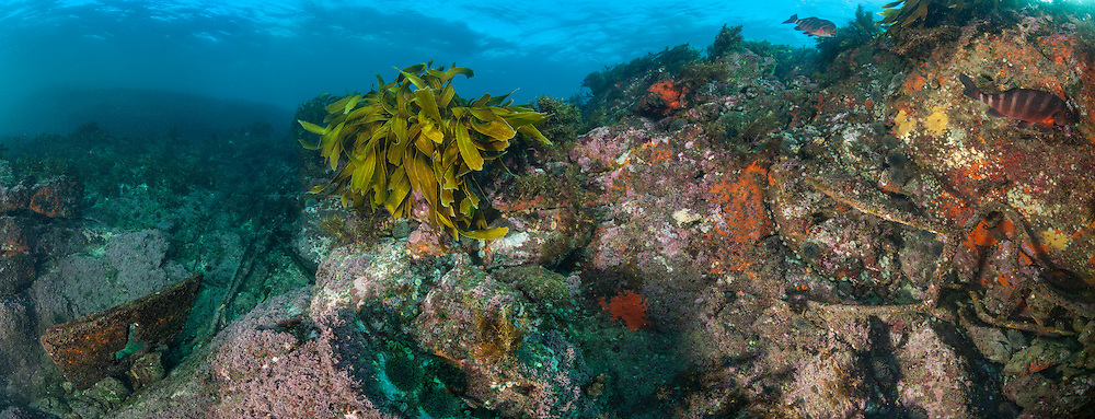 Underwater panorama on the Astrolabe reef in the Rena shipwreck minor debris field, with Rena wreck in background. Underwater panorama made up of seven images stitched into a panorama. New Zealand