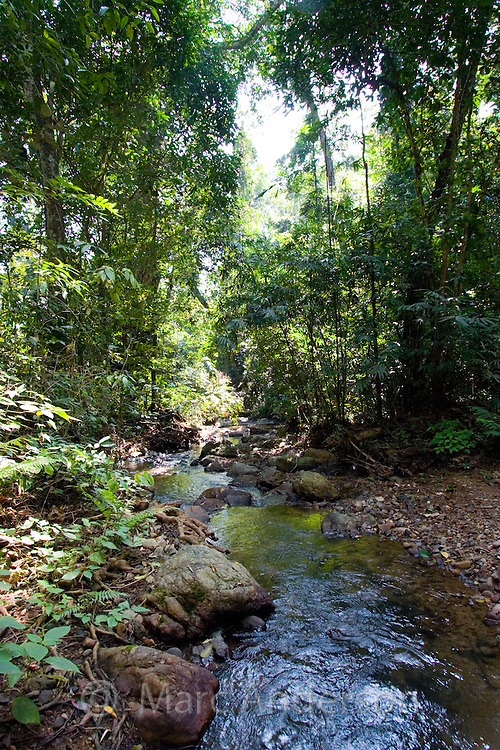 Rainforest stream, Kaeng Krachan National Park, Thailand
