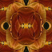Computer abstract of altered and enhancement of Tulip as digital computer art.<br /> <br /> Two or more layers were used to enhance, alter, manipulate the image, creating an abstract surrealistic mirrored symmetry.