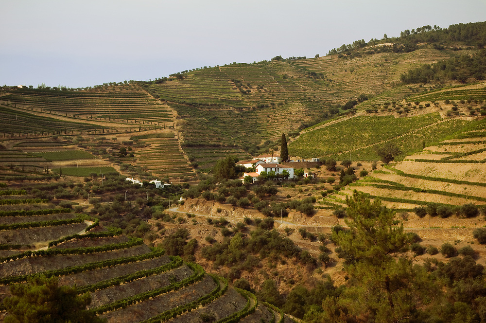 A vineyard in the The Douro Valley, Portugal