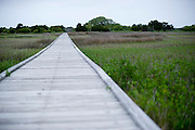 The path that leads to the Kure Beach Hermit's bunker.