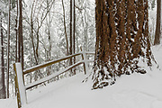 Heavy snow blankets wooden fence and trees in Mount Tabor Park, Portland, Oregon. Most of the snow fell on 10 January 2017; this phot taken the following day.