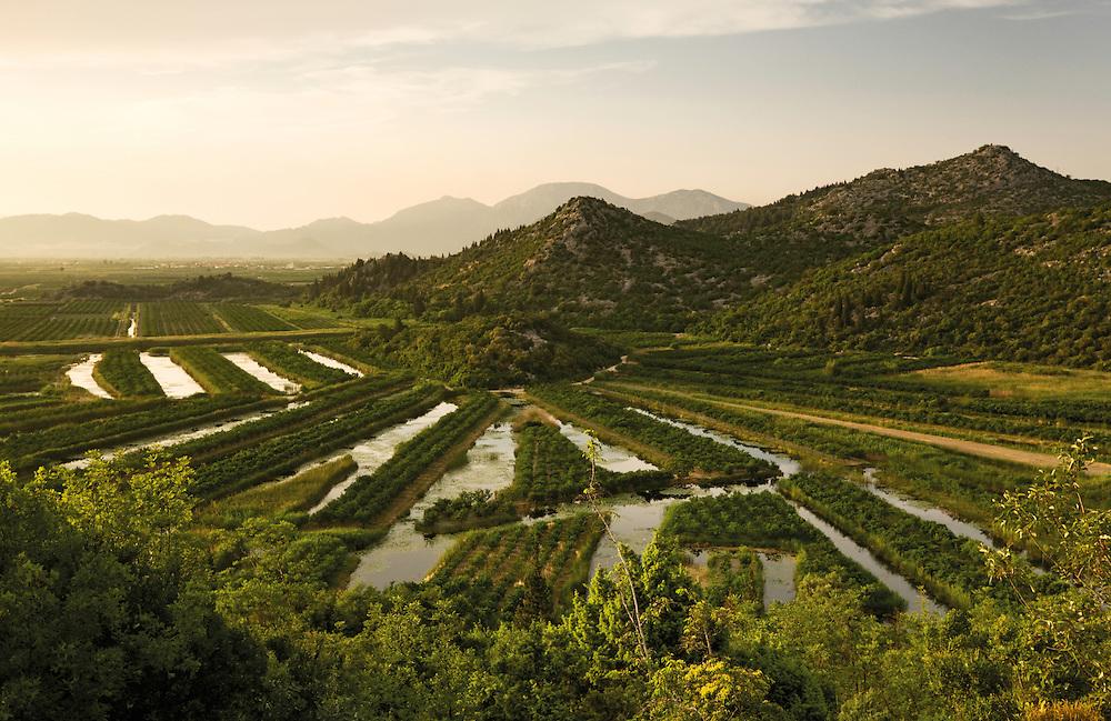 Cultivated part of the lower Delta of the Neretva river (trans-boundary area Croatia/Bosnia-Herzegovina), Dalmatia region, Croatia.  May 2009.<br /> Elio della Ferrera / Wild Wonders of Europe