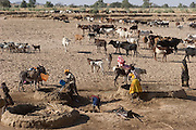Amna Mustapha (in yellow dress) and a cousin fill earthen-walled pools with water for their animals near the Breidjing Refugee Camp in Eastern Chad. They dip plastic containers into a six-foot well and then pour the water into the handmade pools. The millet stalks at the edge of the trough keep the cascading water from breaking down the wall. Families take turns using the pools, which must be rebuilt often and will ultimately wash away during the rainy season.