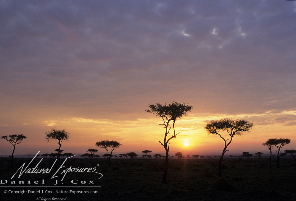 Sunset over the Masai Mara National Reserve in Kenya, Africa.
