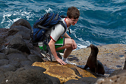A male teenager watches a juvenile Galapagos Sea Lion (Zalphus wollebacki) along a boat landing with lava rocks and ocean in the background, Galapagos Islands National Park, North Seymour Island, Galapagos Ecuador.