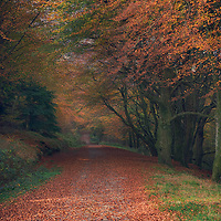 autumn leaves on footpath through woodland