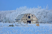Old barn and hoarfrost<br />Rosewood<br />Manitoba<br />Canada