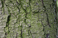 Detail of bark on an old tree