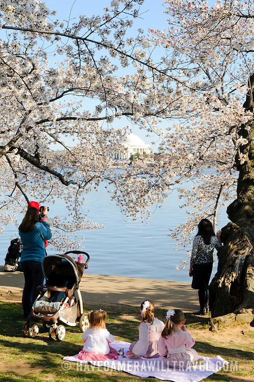 Three young girls are dressed in pink and white dresses to pose for photos during the 2011 Cherry Blossoms during peak bloom around the Tidal Basin in Washington DC. In the background of the shot, across the Tidal Basin and partially obscured by the flowers, is the Jefferson Memorial.
