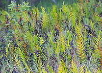 Grass and ferns at Fogg Dam Conservation Reserve, Northern Territory