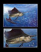 Dos Amigos_sailfish