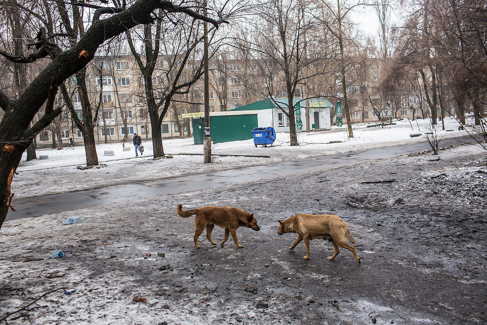 DONETSK, UKRAINE - JANUARY 23, 2015: Two dogs confront each other at the site where a rocket landed and exploded two days earlier, killing one person and damaging nearby apartment buildings, in Donetsk, Ukraine. After the rebels finally took control of the heavily contested airport in Donetsk from the Ukrainian Army, they have promised an offensive to extend their territory further. CREDIT: Brendan Hoffman for The New York Times