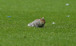 A squirrel stops play at Loftus Road - Photo mandatory by-line: Robin White/JMP - Tel: Mobile: 07966 386802 21/12/2013 - SPORT - FOOTBALL - Loftus Road - London - Queens Park Rangers v Leicester City - Sky Bet Championship