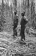 Cane Workers - Buff Bay - Jamaica