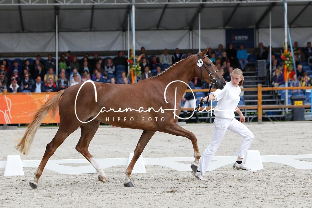 059 - Cinerma<br /> KWPN Paardendagen Ermelo 2010<br /> © Dirk Caremans