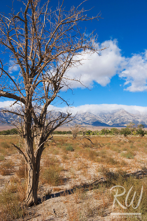 Manzanar National Historic Site Landscape, Independence, California