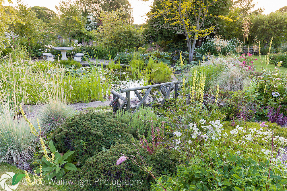 A richly stocked herbaceous border close to the pond at Bluebell Cottage Gardens, Cheshire - photographed on a July evening