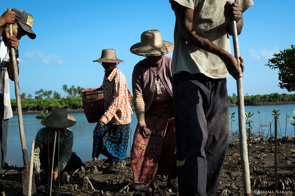 Local villagers plant mangrove saplings in a very systematic manner. 1st there is a digger, then a planter, adjacent to her is the 'collector' of the bags the saplings had been growing in, ensuring there is no litter left behind. Many of the local villagers are daily wagers, so the planting by Worldview International provides steady employment. Currently, 70% of the planters are women. <br />