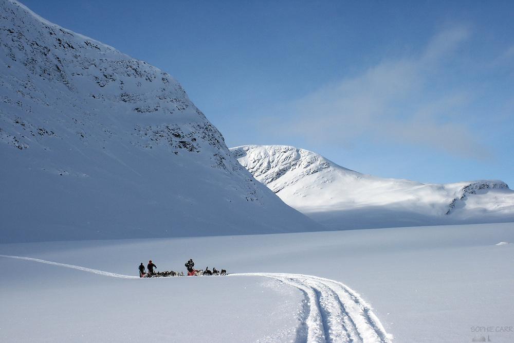 Husky Sledging in the Kungsleden - northern Sweden, in winter